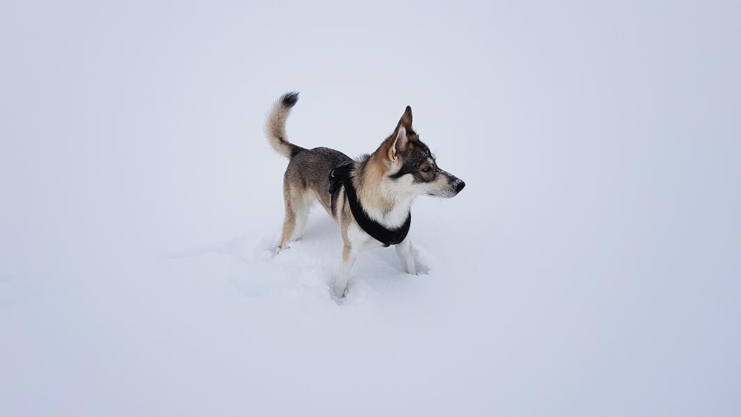 Kahlan im Schnee, 3,5 Jahre alt